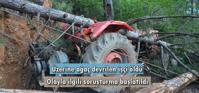 Üzerine ağaç devrilen işçi öldü