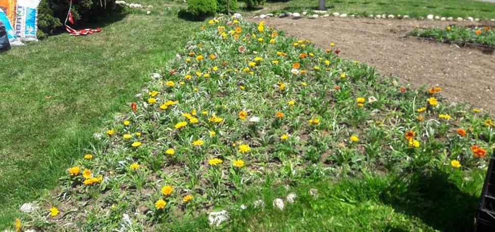 Safranbolu Çiçek Açtı