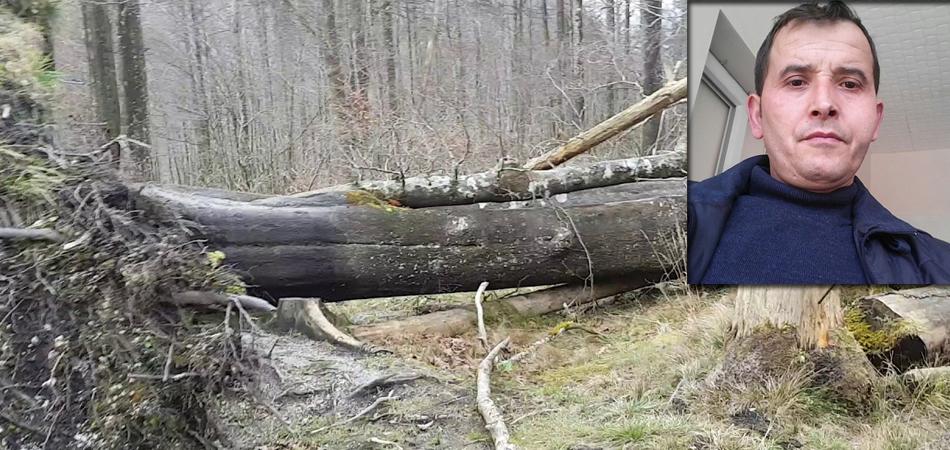 Yenice'de devrilen ağacın altında kalan orman işçisi hayatını kaybetti