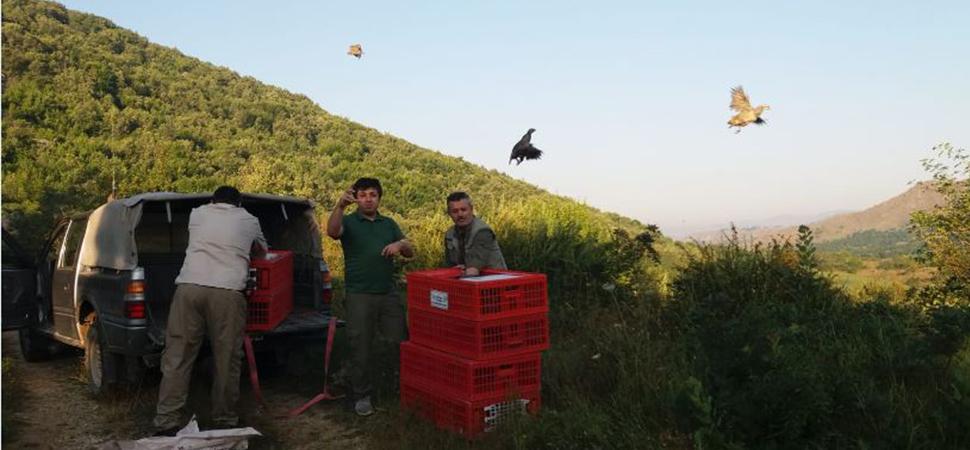 Bin kınalı keklik doğaya salındı